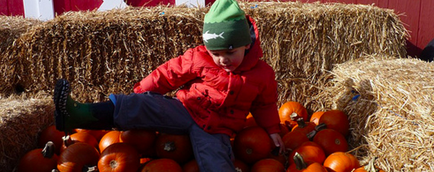 Calgary Pumpkin Patches