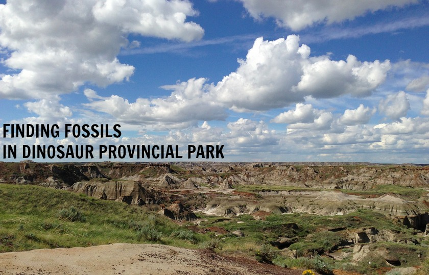 How To Find Fossils In Dinosaur Provincial Park