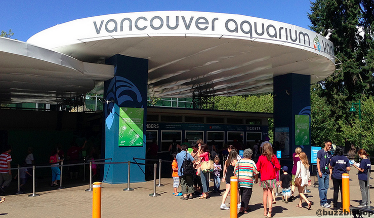 the vancouver aquarium