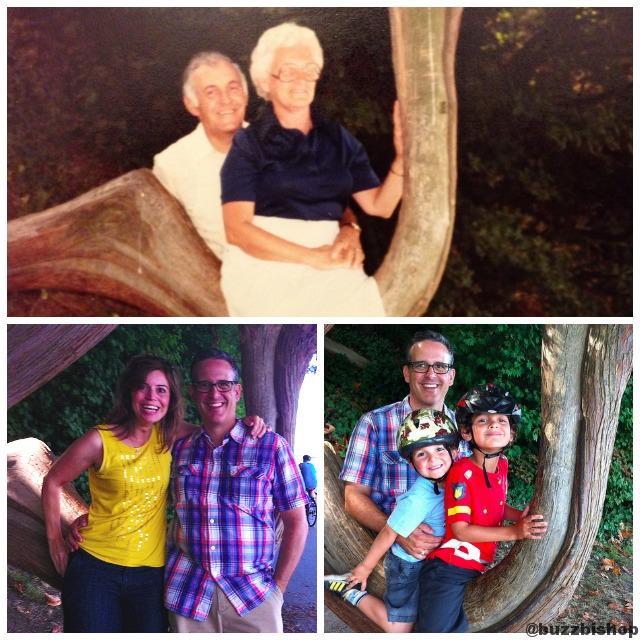stanley park tree