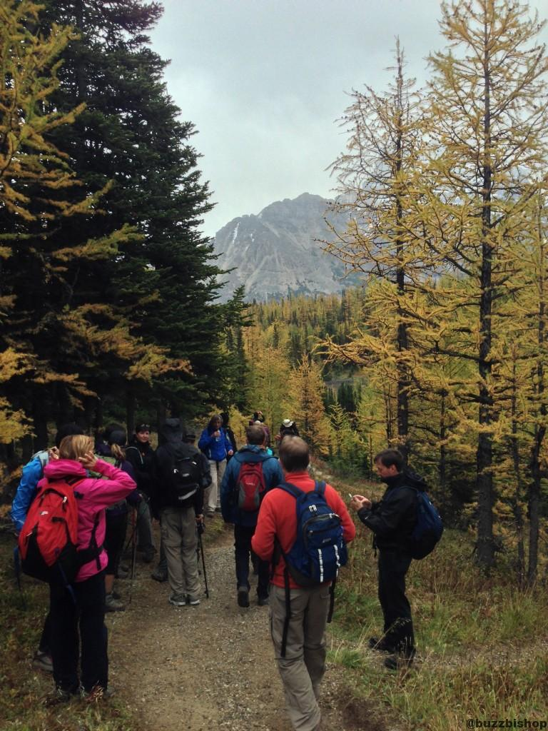 crowds on the Larch Valley Trail