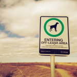Dog Owners Don't Usually Follow These Rules