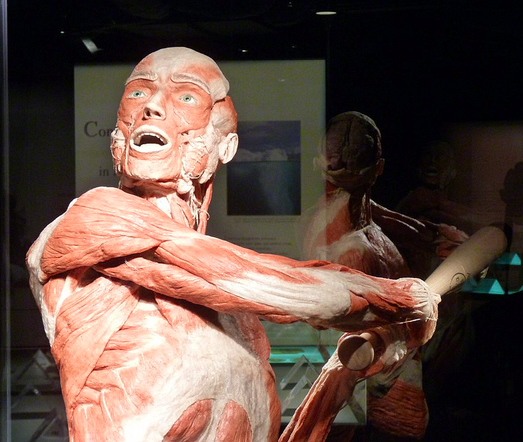 Body Worlds At Telus World Of Science In Edmonton