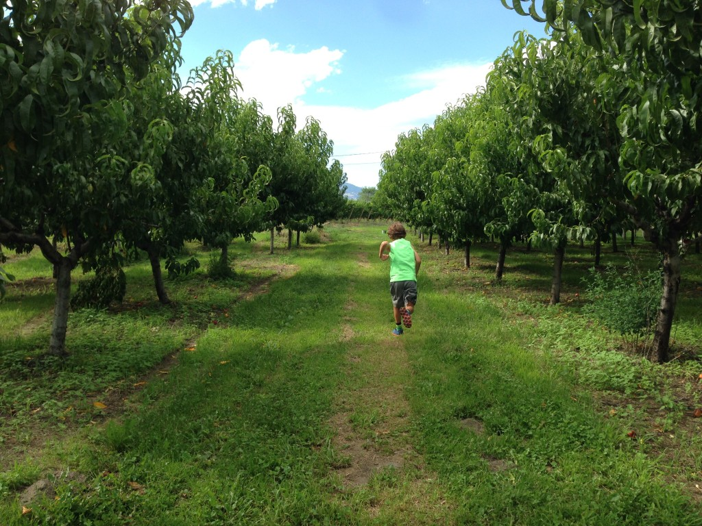 U Pick Peach Orchard in Osoyoos