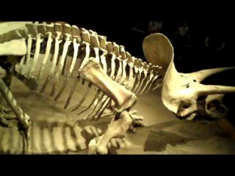 Calgary Daytrips: Drumheller, Hoodoos and Dinosaurs