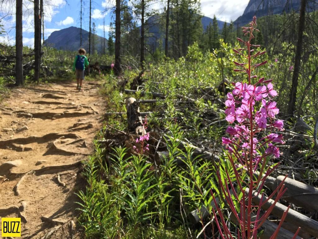 Stanley Glacier Hike flowers - Buzz Bishop