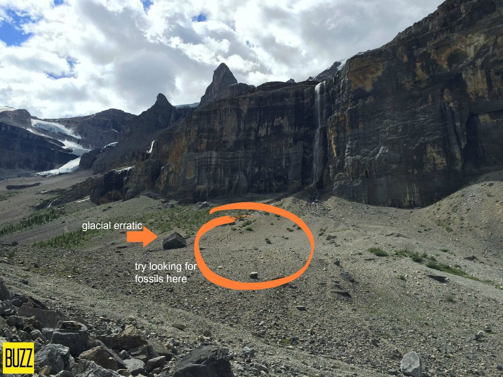 Looking For Fossils At Stanley Glacier - Buzz Bishop