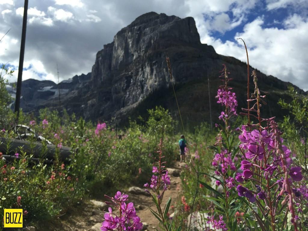 stanley peak at Stanley Glacier - Buzz Bishop
