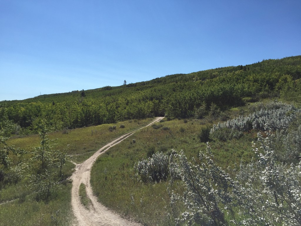 The start of the Ridge Run trail on Paskapoo Slope