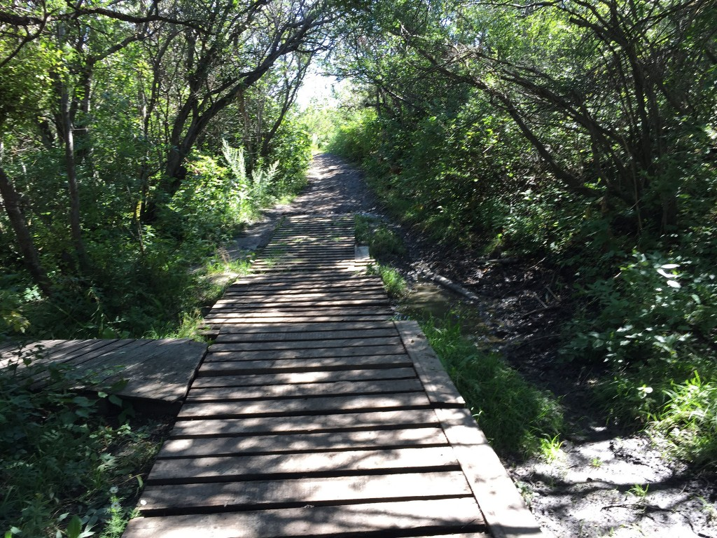 Boardwalk on Paskapoo Slopes trail - TBAB