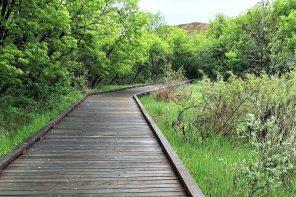 Running Trail in Medicine Hat - Buzz Bishop
