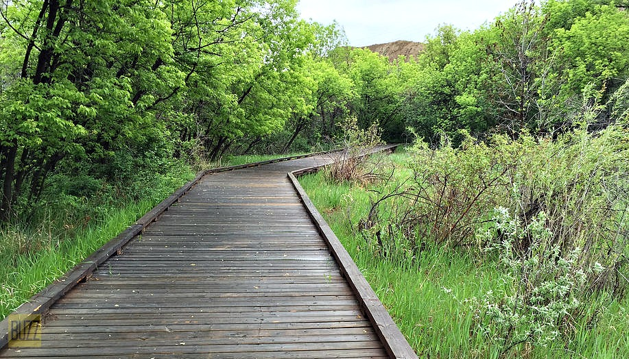 Running Trail in Medicine Hat - Buzz Bishop