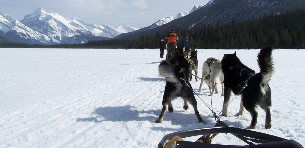 Dog Sledding on Spray Lakes